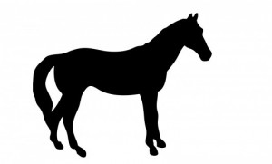 Beelddenken - paard